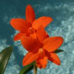 blc_young-min_orange