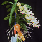 christierara-dodie-briskey-exhibitor-kim-pendleton-2