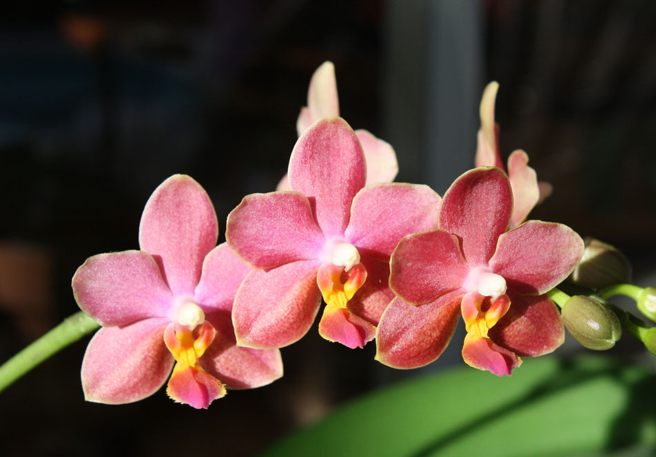 phal_chiada_stacy